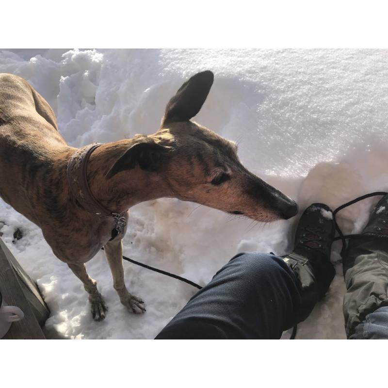 Image 1 from Edith of Hanwag - Tatra II Lady GTX - Walking boots